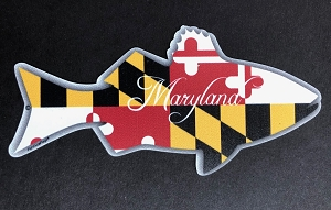 Fish Outa Maryland - Curly Script - Magnet and Decal
